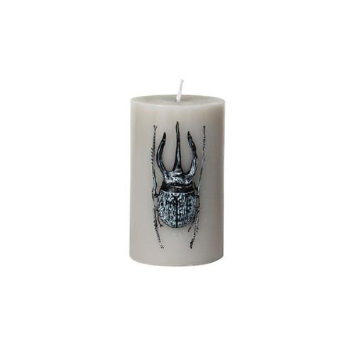 Kerze käfer