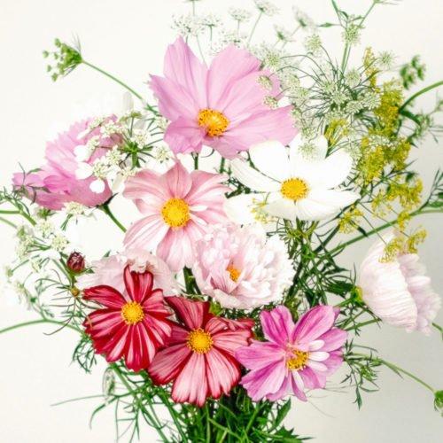 Jora-Dahl-Cosmos-Wild-Bouquets